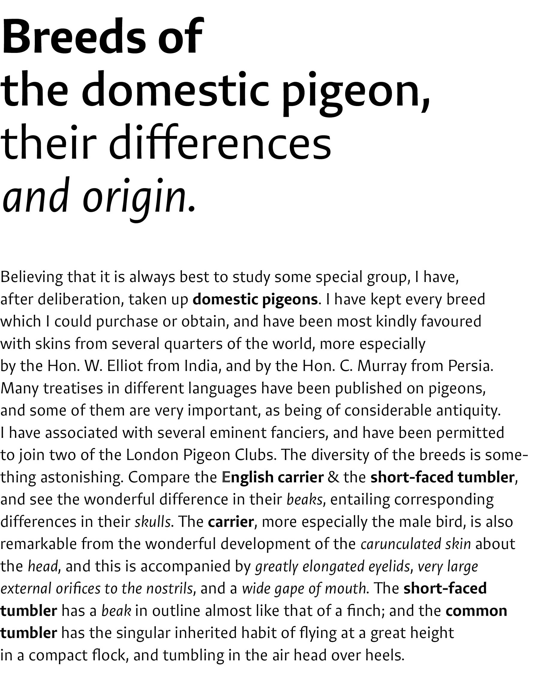 On-the-Origin-of-Species-pigeons